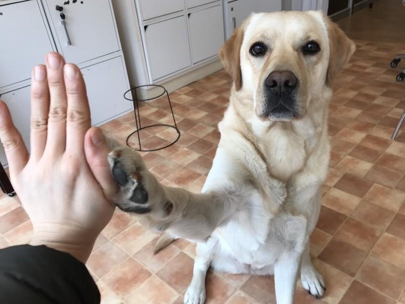 愛犬のことが解る、通じる!ドッグトレーニング お試しズーム講座!の画像