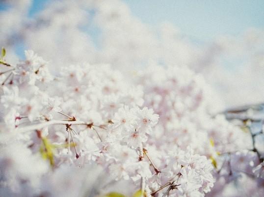 実践!プロのカメラマンに学ぶ、SNSが映える桜撮影講座!の画像