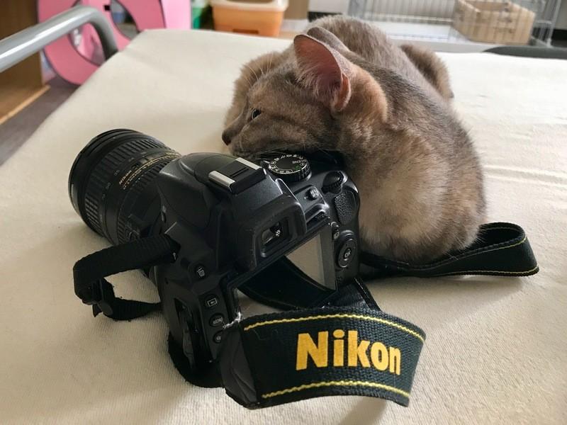 猫と一緒に♪ゆるく楽しく写真の勉強会!の画像