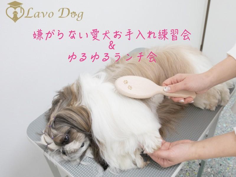 『嫌がらない愛犬のお手入れレッスン&ランチ会』の画像