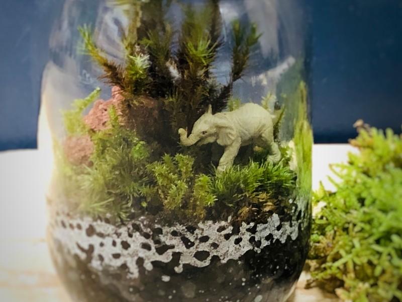 ボトルの中の小さな世界〜苔テラリウムをつくろうの画像