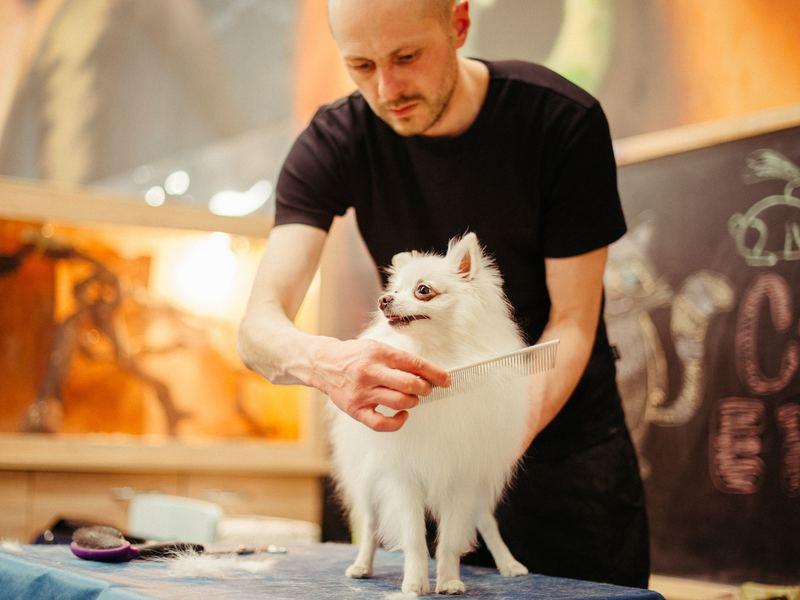 『トリミングサロン選びのポイントと愛犬の老後に備える自宅ケアとは』の画像
