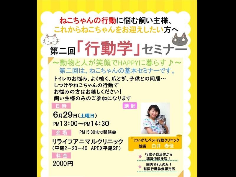 九州初開催!白井先生の猫がより好きになる第2回「猫行動学」セミナーの画像