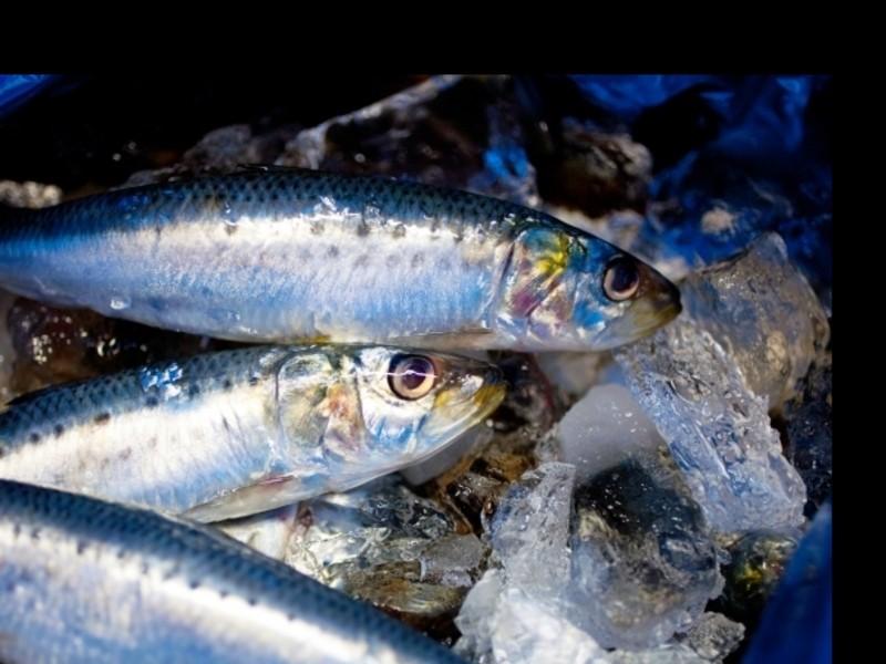 ◆魚の捌き方 入門編 イワシを3匹捌きます 手開き 三枚おろしなどの画像