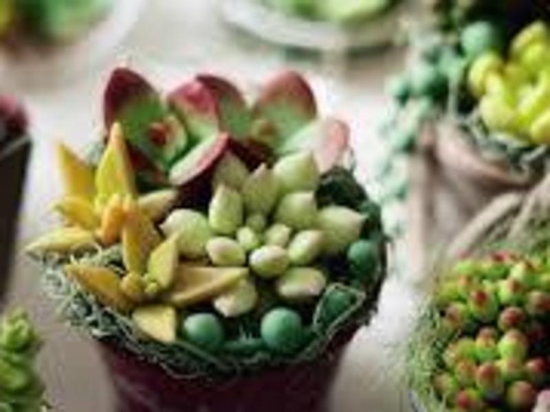 ❤︎みんな大好き多肉植物の寄せ植え❤︎の画像