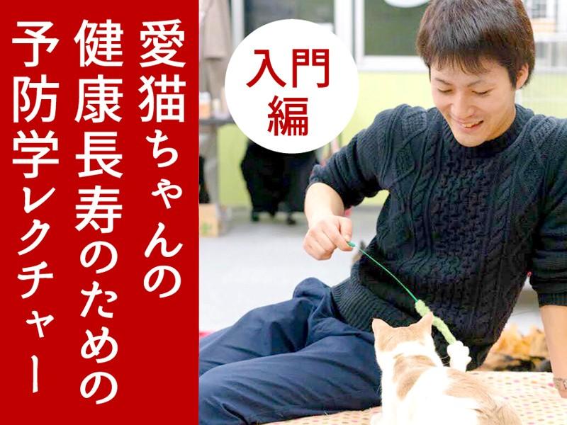 愛猫ちゃん健康長寿の予防学レクチャー【入門編】11・12・2・3月の画像