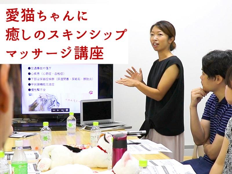 愛猫ちゃんに癒しのマッサージ講座(東京開催:12・1・3月)の画像