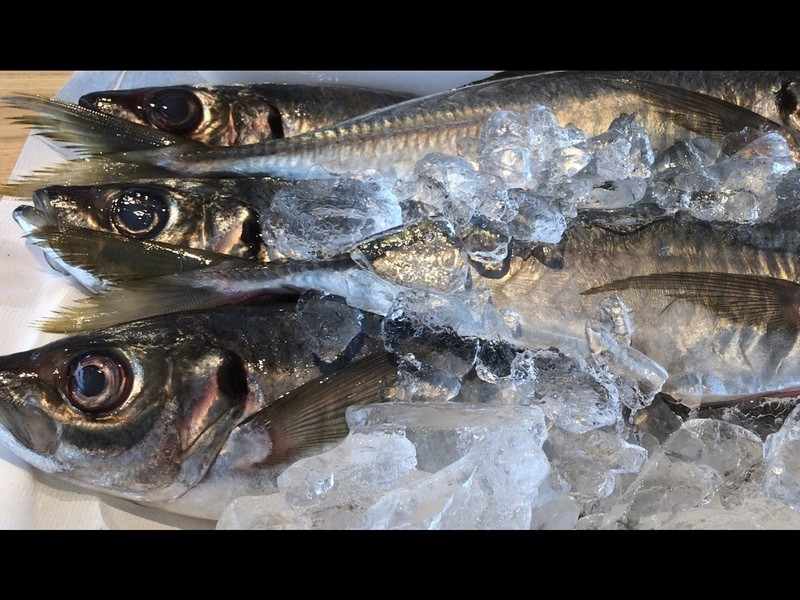 やさしい魚の捌き方・番外編 「市場or商店街探検隊」の画像