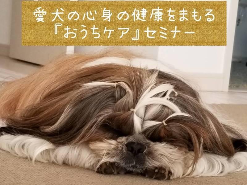 【愛犬の「こころ」と「からだ」の健康をまもる嫌がらないおうちケア】の画像