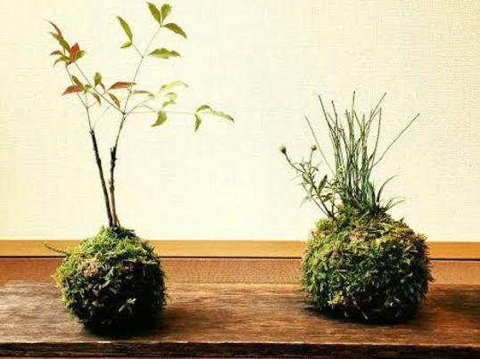 ☆長く続けられる趣味がいい☆ 癒しの盆栽と苔玉の教室の画像