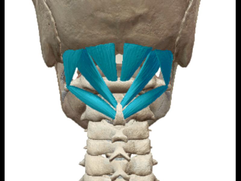 整体やリラクゼーション・エステなどで実際に使える解剖学(初級編)の画像