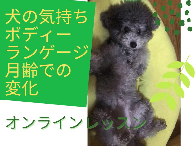 【オンライン】犬の気持ち・ボディーランゲージ・月齢での心理変化の画像