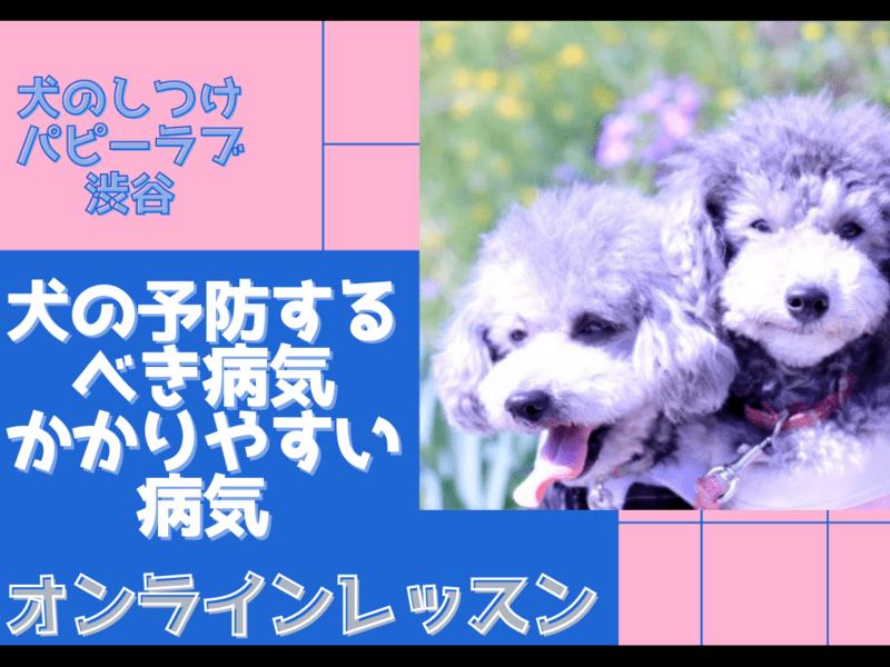 【オンライン】犬の予防するべき病気・かかりやすい病気の画像