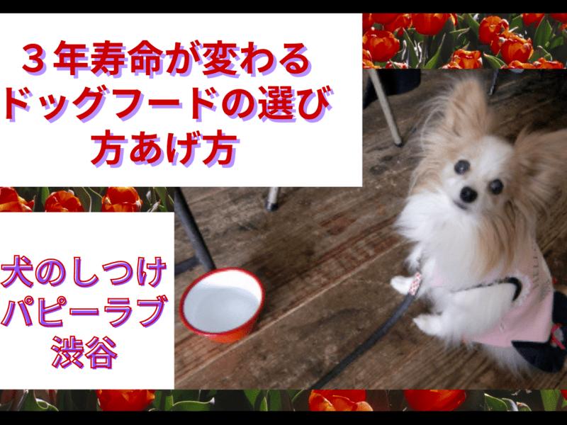 【オンライン】3年寿命が変わるドッグフードの選び方・あげ方の画像