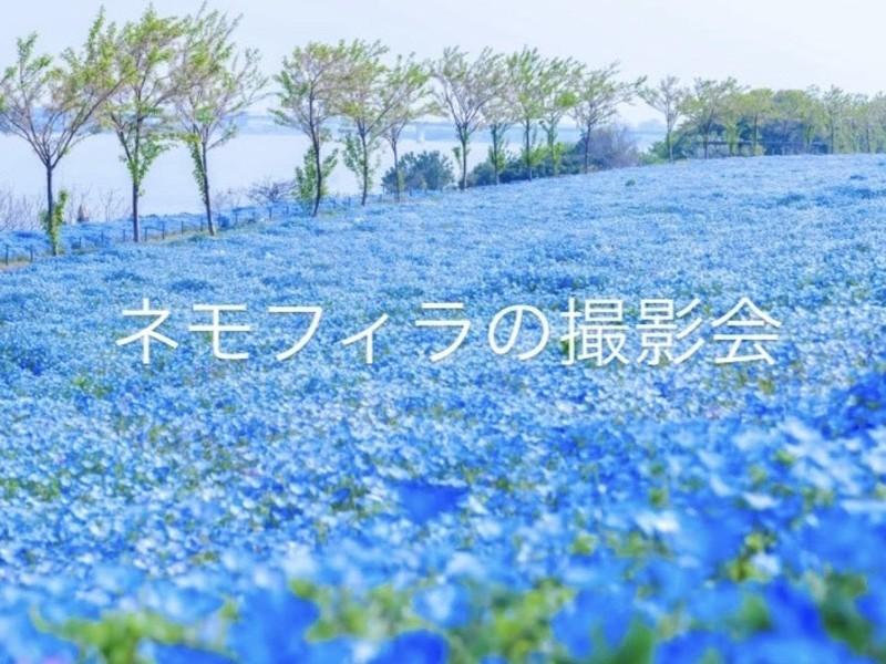 【花の撮影会】大阪まいしまシーサイドパークでネモフィラを撮ろう♪の画像