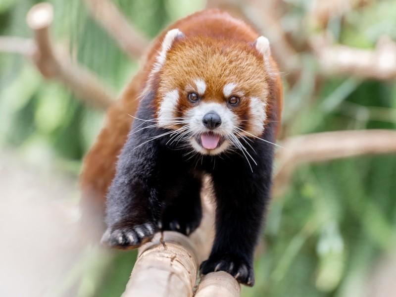 【動物の撮影会】神戸どうぶつ王国で動物写真を可愛く撮ろうの画像