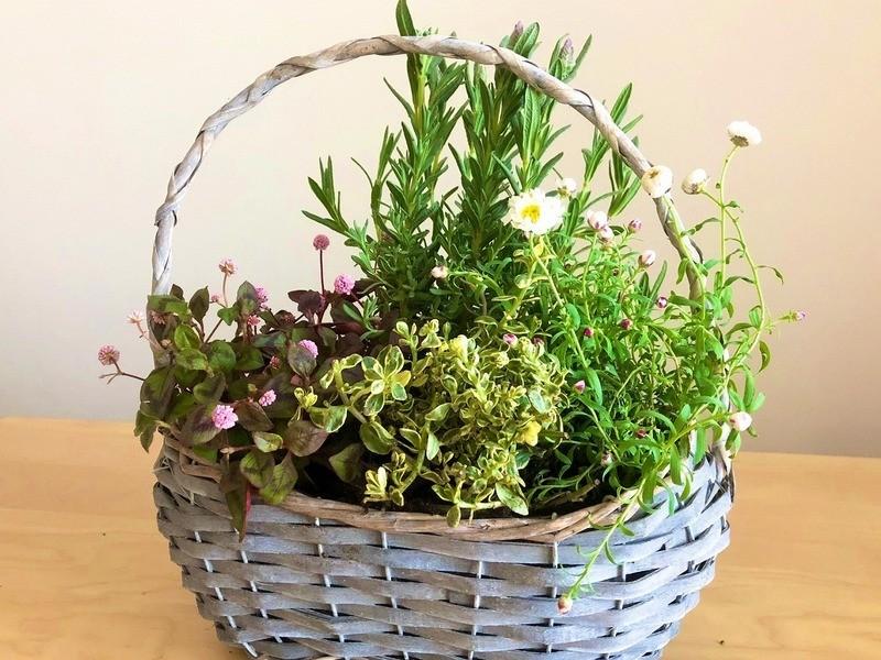 お花が自由に選べる!春の寄せ植えワークショップの画像