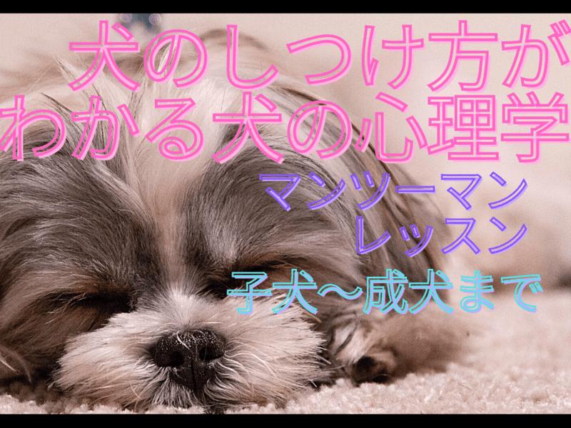 【マンツーマンオンライン】犬のしつけ方が分かる犬の心理学の画像