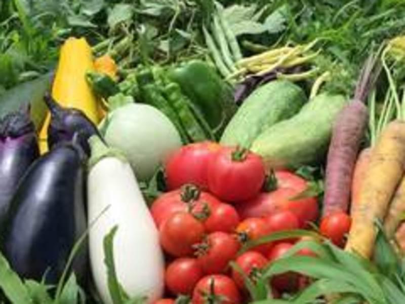 第3弾 安全な肉、魚、野菜の見分け方と毒性を緩和する下ごしらえ✨✨の画像