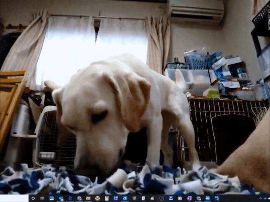[オンライン講座]新しく犬を迎え入れた飼い主さんが知っておくことの画像