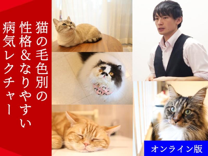 【オンライン版】猫の毛色別の性格&なりやすい病気レクチャーの画像