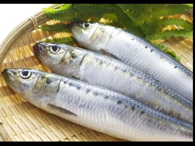 オンライン5月キャンペーン  魚をさばく初級編いわしをさばくの画像