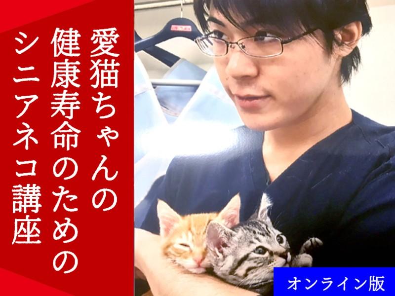 【オンライン版】愛猫ちゃんの健康寿命のためのシニアネコ講座の画像
