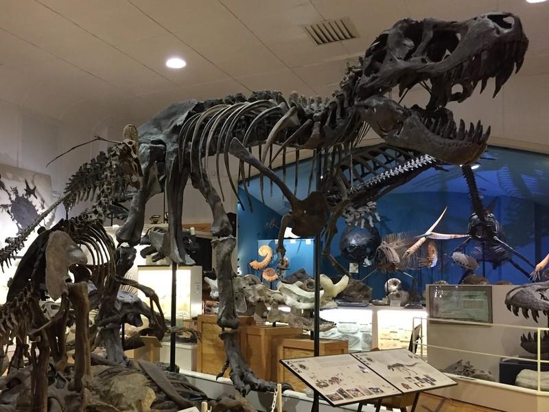 無料お試しからスタート! ヒロくんの恐竜教室の画像