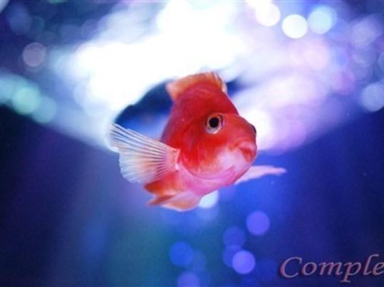 初心者歓迎!水族館写真カメラ教室@アクアパーク品川の画像