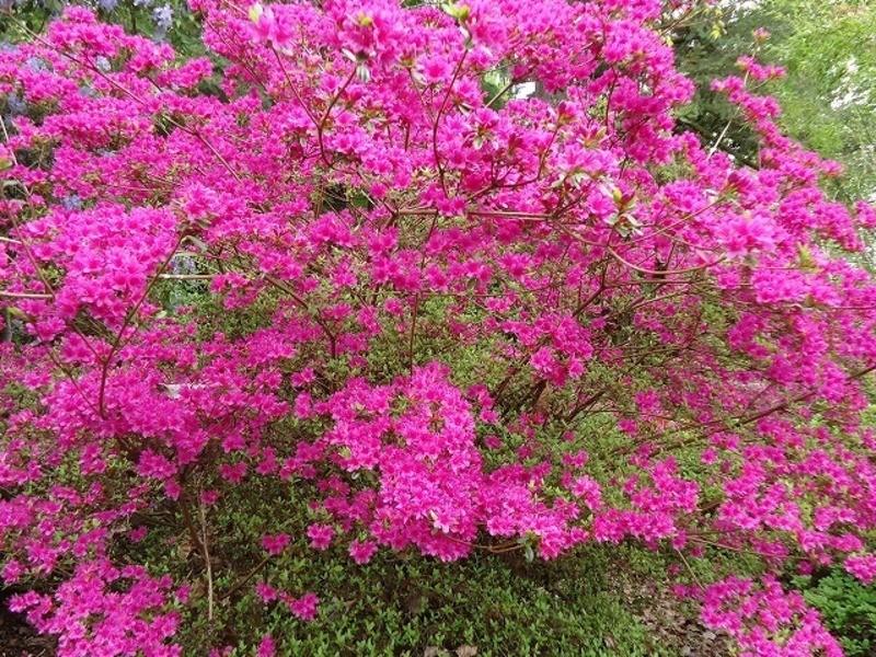 【個人講座】お花の癒しでストレスをスッキリ、前向きに生きよう!の画像