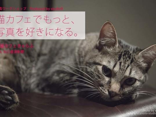 猫カフェで室内の猫ちゃんをたっぷり、上手に撮る!【初心者OK!】の画像