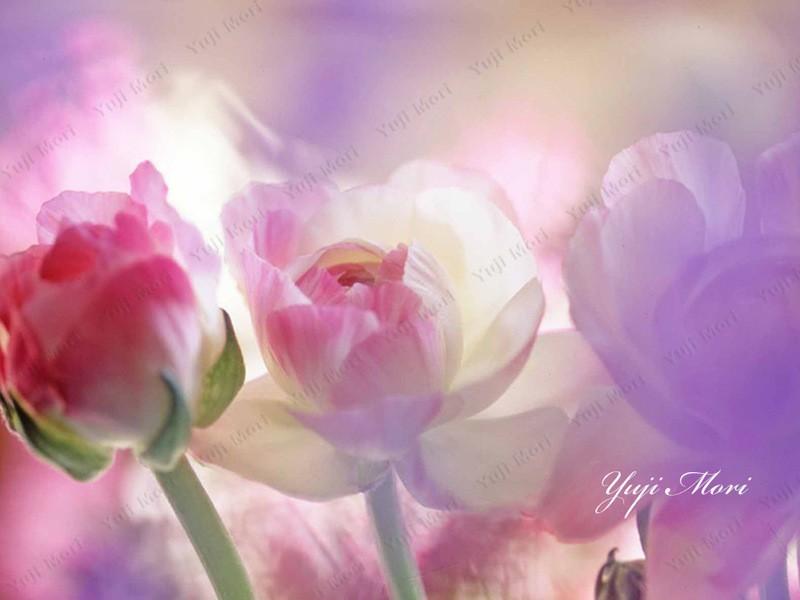 オンライン講座 初心者も分かりやすい花の撮り方講座 基礎編の画像