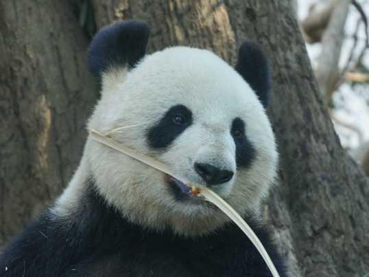 動物達の「可愛らしさ」を写真にしましょう★in上野動物園の画像