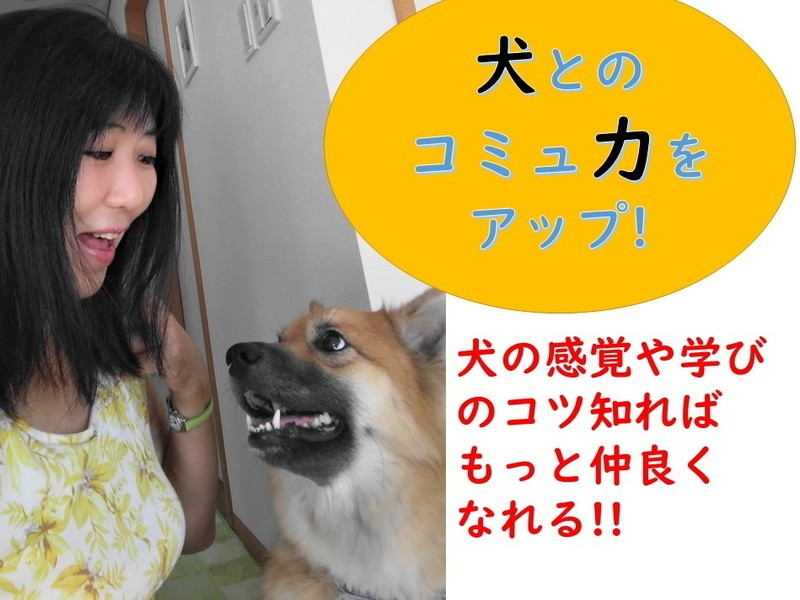 犬から見た世界を知って「犬とのコミュ力をUPする」【視覚編】 の画像