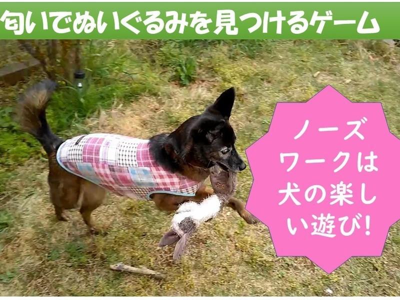 クンクンは犬の挨拶! 嗅がせて「犬とのコミュ力をUP」【嗅覚編】の画像