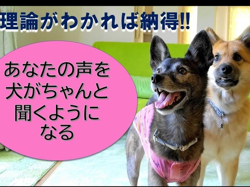 犬の聴覚と味覚を知って「犬とのコミュ力をUP」【聴覚編】【味覚篇】の画像