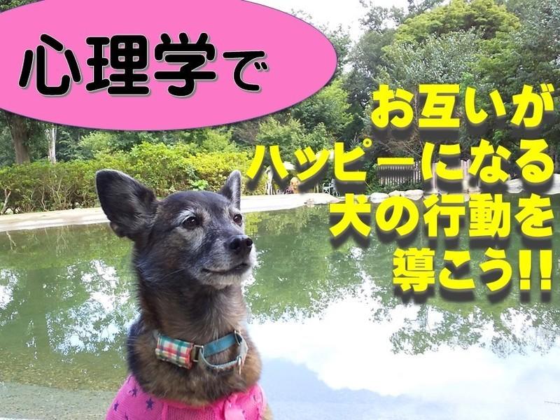 犬の問題を解決する力が身につく! 心理学・行動分析学を楽しく学ぼうの画像