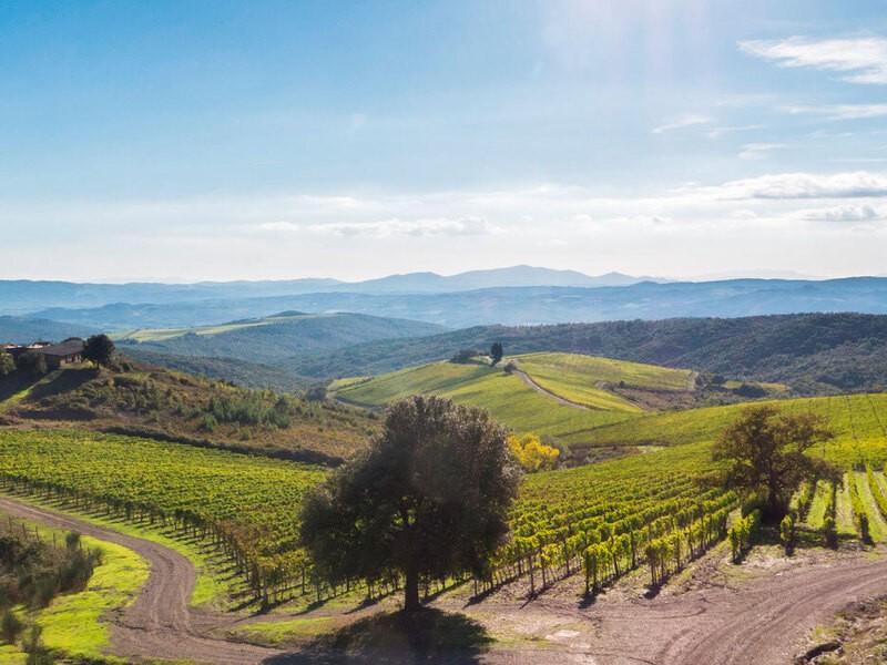 イタリアのオンラインワイナリーツアー!の画像