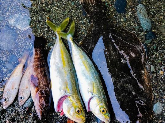 身近な河川、海で手ぶらで釣り体験の画像