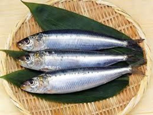 魚をさばく初級編イワシを2尾さばく  の画像