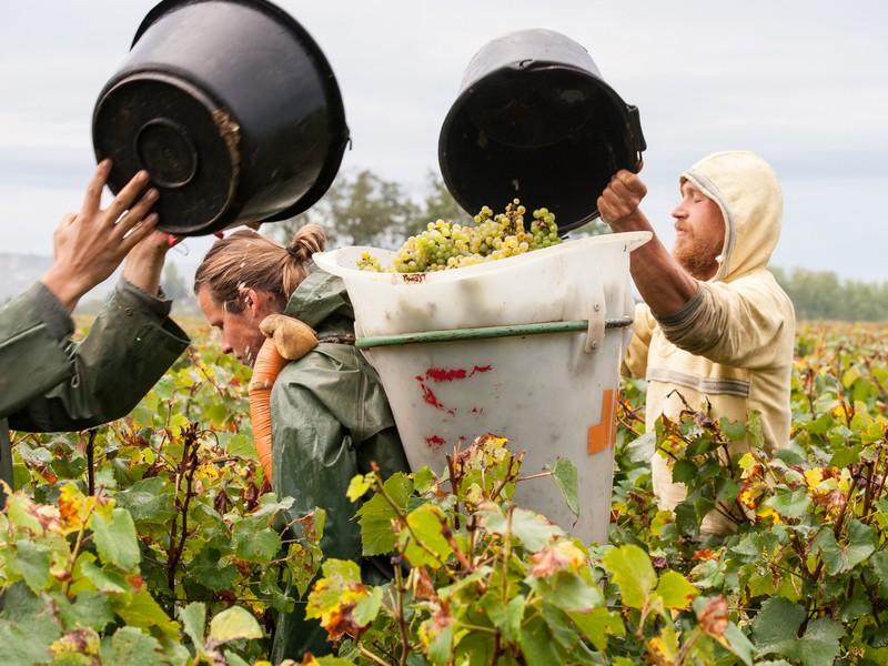 初級 ブルゴーニュのブドウ畑を取り巻く1年の画像