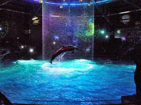 夜の水族館で撮影会@品川アクアパークの画像
