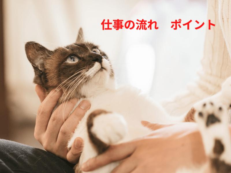 第4回【ペットシッター入門!】ペットシッターへの第一歩を知る講座の画像