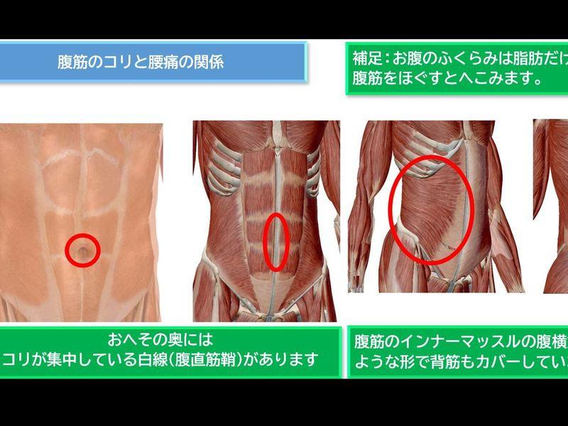 【即効性】運動が苦手な人のための腰痛改善セルフ整体講座_おまけつきの画像