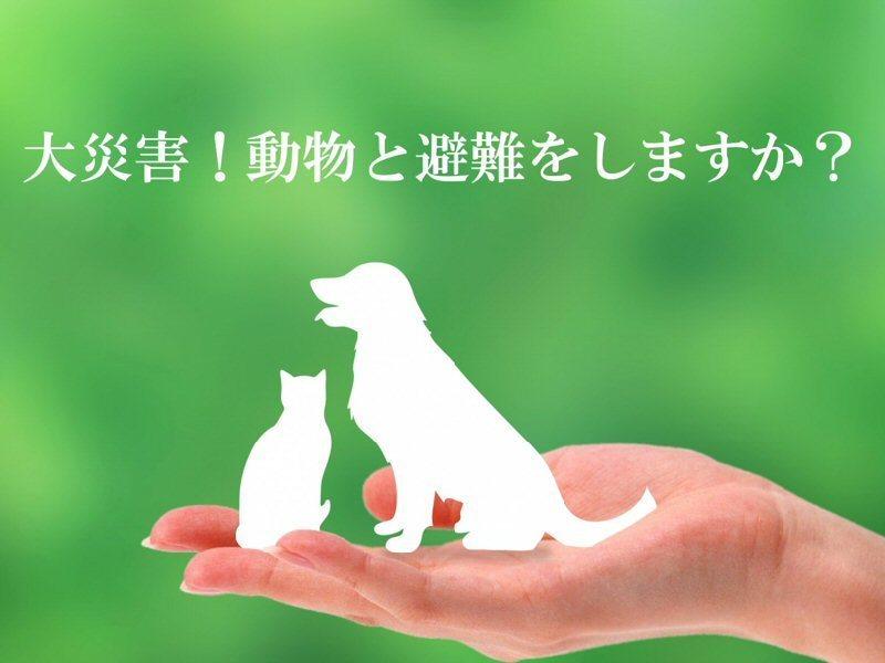 【防災アニマルCafe】犬猫・うさぎ動物達の避難についての画像