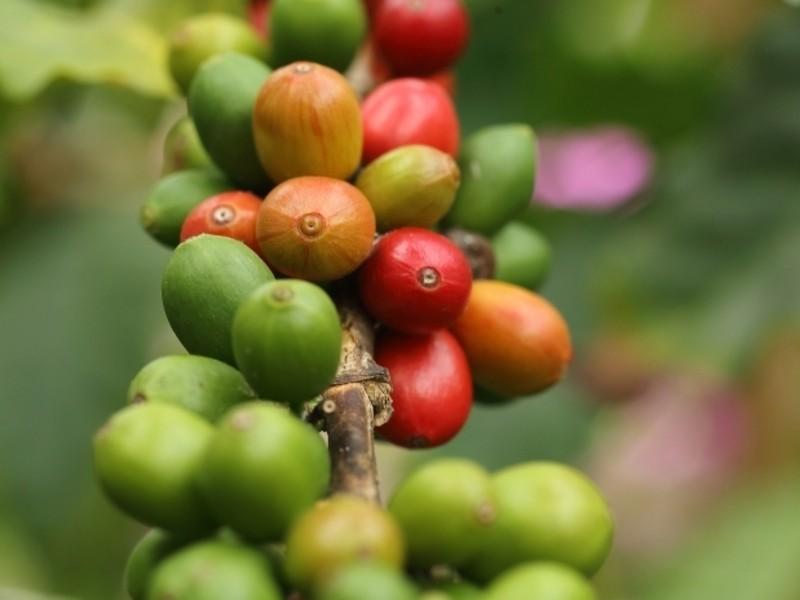 【オンライン】コーヒーインストラクター3級検定講座の画像