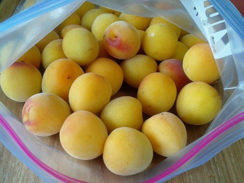 梅しごと「ポリ袋で作る減塩梅干し」の画像
