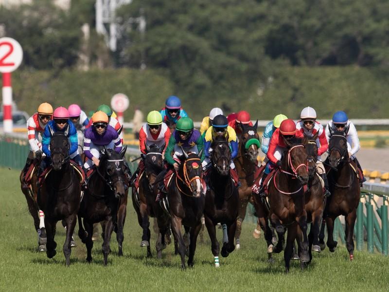 馬を知る 撮影に活かす 競走馬撮影の会の画像