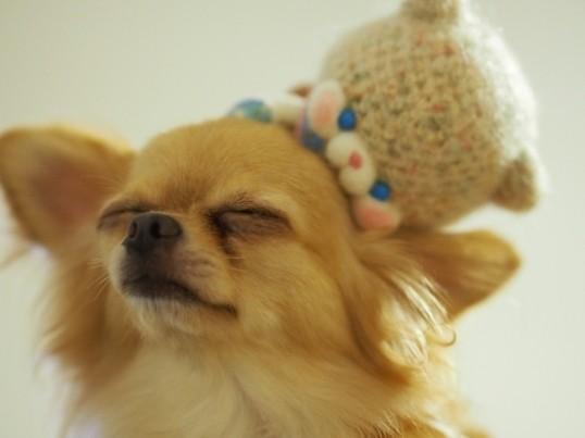 愛犬の性格を理解したドッグトレーニングを受けてみよう!の画像