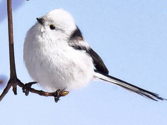 野鳥を撮ろう♪一瞬で設定を決めて、その瞬間を捉える!!の画像
